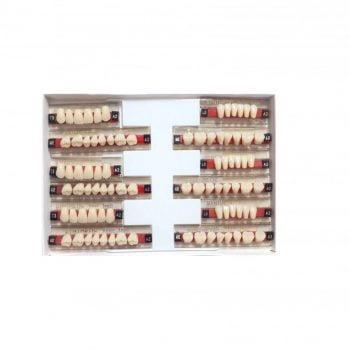Garnituri de dinti acrilatset complet T3A2