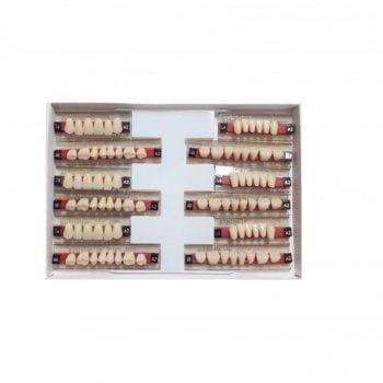 Garnituri de dinti acrilatset complet T4A2